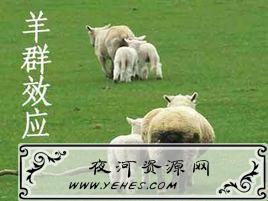 """""""羊群效应""""是什么意思?"""
